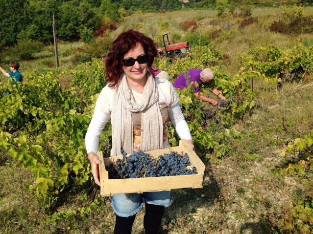 Grape Stomping Provence